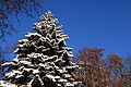 Засніжений ботанічний сад ім. акад. Фоміна P1320849.jpg