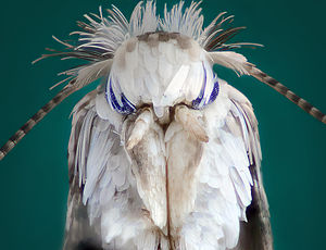 Image of Moth: http://dbpedia.org/resource/Moth