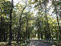 Михайлівці парк 019.jpg
