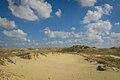 НПП «Олешківські піски» фото Павленко О.jpg