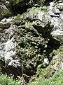 Окрестности Гегского водопада - panoramio (2).jpg