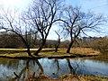 Пойменный ивняк по правому берегу реки Яузы выше пр. Дежнева (ивняк в правобережной пойме р. Яузы выше пр. Дежнева).jpg