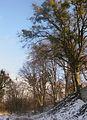 Підгорецький парк,.jpg