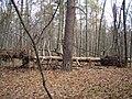 Украина, Киев - Голосеевский лес 214.JPG