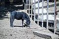 حیوانات باغ وحش مرکزی شهر تفلیس پایتخت گرجستان 40.jpg