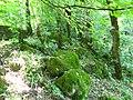 منظره زیبا از جنگل جواهر ده رامسر - panoramio.jpg