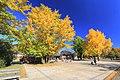 昭和記念公園 - panoramio (37).jpg
