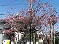 桂川サイクリングロード - panoramio (3).jpg