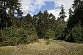 森林里的草原 - panoramio.jpg