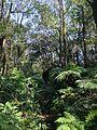 白石湖山步道 - panoramio.jpg
