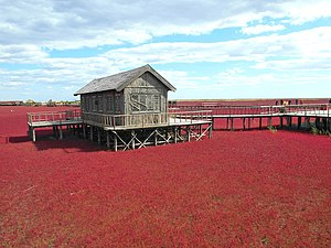 Panjin - Red Seabeach
