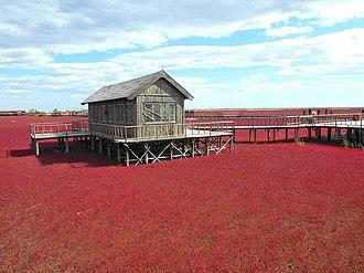 Red Beach (Panjin) - Red Beach, Panjin, China