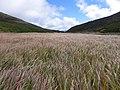 赤石川の草原2013(Grassy plain ) - panoramio.jpg