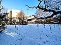 雪后的潍坊学院 2020-12-30 16.jpg