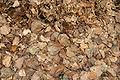 - Leaves 01 -.jpg