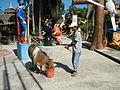 01231jfParsolingan Fishes Resorts Gerona Tarlac Cityfvf 42.JPG