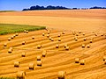 012 Hay bales during harvest in Meuse Department, France - Creative Commons free stock photo with attribution.jpg