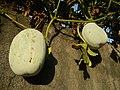 0169jfSabang Chapels Caingin Pantubig San Rafael Plants Bulacanfvf 31.JPG