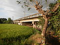03910jfPaddy fields village Baliuag Bulacan Candaba Pampanga Bridge Roadfvf 11.JPG
