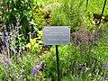 11072009 herbgarden.jpg