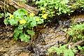 14-05-04-pramen-nysa-RalfR-DSC 1045-012.jpg