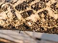 16-01-22-Schwalbe Marathon Winter-DSCN0133.jpg
