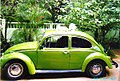 1967 Beetle with cats.jpg