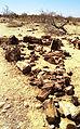 1999-08-03 020 (Petrified Forest - Khorixas).jpg