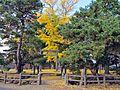 1st Torii gate of Taga-jinja shrine in Taihaku ward,Sendai city 01.JPG