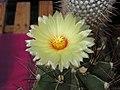 2010. Выставка цветов в Донецке на день города 49.jpg