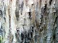 20110425 Amsterdam 25 tree trunk without bark in Piet Wiedijkpark.JPG