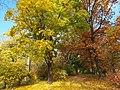 20121029010DR Dresden-Südvorstadt Beutlerpark Herbst.jpg