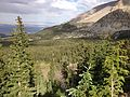 2013-07-14 17 58 43 Engelmann Spruce along the Wheeler Peak Summit Trail in Great Basin National Park, Nevada.jpg