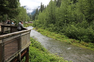 Hyder, Alaska - Fish Creek is a popular bear watching destination, especially during the salmon run.