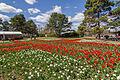 2015-09-18 Floriade Canberra 2015 - 6.jpg