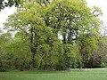 20150508740DR Ahlsdorf (Schönewalde) Schloßpark.jpg