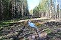 2015 37 Национальный парк Мещёрский.jpg
