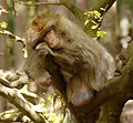 2016-04-21 14-42-01 montagne-des-singes.jpg