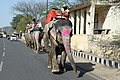 2017-03-05 153113 Elephant at Amber Fort anagoria.JPG
