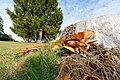 2017-10-25 15-35-38 champignons.jpg