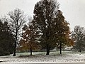 2018-11-15 08 26 20 Snow and sleet covered Sugar Maples and Pin Oaks along Stone Heather Drive between Stone Heather Court and Ladybank Lane in the Chantilly Highlands section of Oak Hill, Fairfax County, Virginia.jpg
