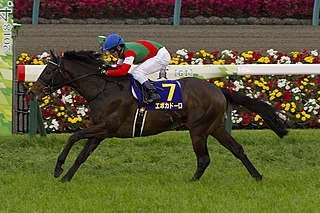 Epoca dOro Japanese-bred Thoroughbred racehorse