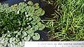 2020-06-19 — de waterlelies (2014) door herman de vries – monument voor Fechner, Diepenheim - 6.jpg