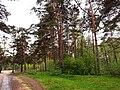 """3499. Bolshaya Izhora. Reserve """"Lebyazhiy"""".jpg"""