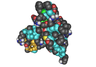 Insulin-like growth factor - ILGF