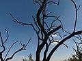 5 Azraq reserve (32) (13252747424).jpg