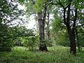 615954 pow krakowski gm Liszki Piekary park 02.JPG