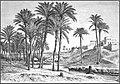 AFR V1 D443 Sepi canal at Fidemin-el-Fayum.jpg