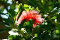 A Fuschia Flower.jpg
