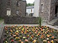 A bed of roses - geograph.org.uk - 1371903.jpg